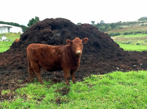 Looking manure for my garden