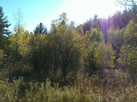 Hunting Land in Blind River! 90 Acres