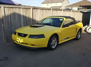 2003 Mustang Convertible MUST GO NOW !!!