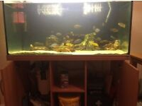 Fully set up 4ft fush tank and all accessories £375 OPEN TO OFFERS