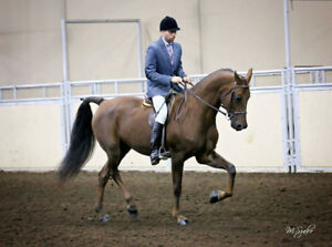Gorgeous and Athletic Mare