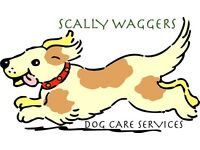 Scally Waggers - Dog Walking and Day care services in the mendips