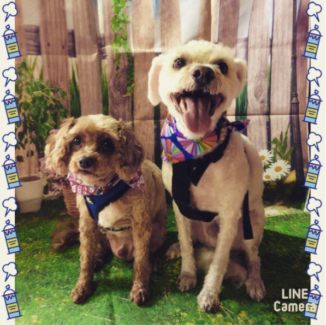 Pooch dog grooming in melbourne region vic gumtree australia free poochi grooming solutioingenieria Image collections