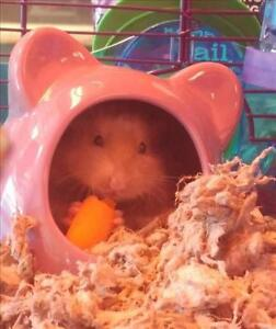 """Young Male Small & Furry - Hamster: """"Swiffer"""""""