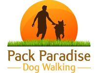 Professional dog walker in East London - Mile End, Bow, Hackney, Stratford and surrounding areas.
