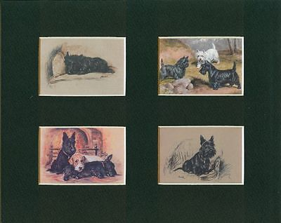 Scottish and Cairn Terrier - Dog Art Print (4 Images) - CLEARANCE