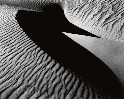 Bird Dune, Oceano