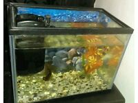 Black moor fish and tank needs gone asap