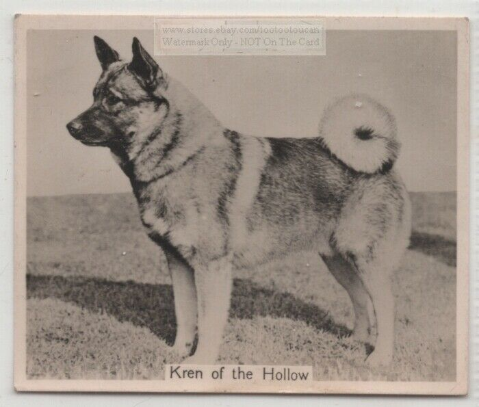 Norwegian Elkhound 1930s Champion  Dog Breed Canine Pet Ad Trade Card