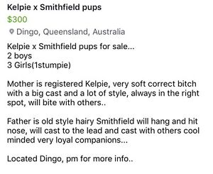 Working Pups Bassendean Bassendean Area Preview