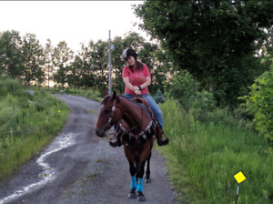 Registered QH Mare - 12 year old