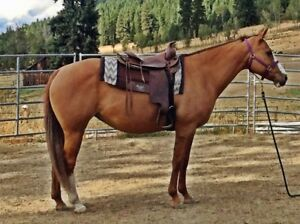 Red dun mare