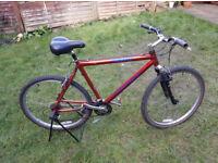 """Terrano Equator adult bike 26"""" wheels"""