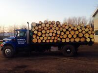 Firewood popular 8 foot lengths