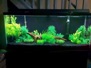 55 gallon fish tank and stand with artificial plants