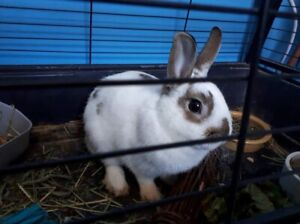 PENDING Bunny looking for new home