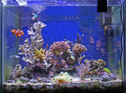 so finden sie die perfekte abdeckung und aquarium beleuchtung ebay. Black Bedroom Furniture Sets. Home Design Ideas