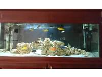 250L 4ft Long Fish Tank with Equipment and Accessories