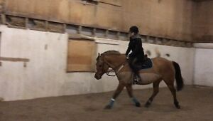 Horse training/starting available.
