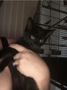 12 week old kitten