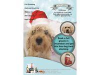 December Offer for Dog Grooming