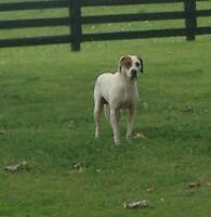 DEXTER - Foster & Forever Home Needed!!!