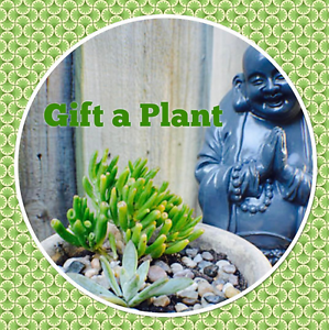 Gift a Plant - Buy Plants Local Business Landsdale Wanneroo Area Preview