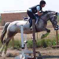 Jumper mare available for part board