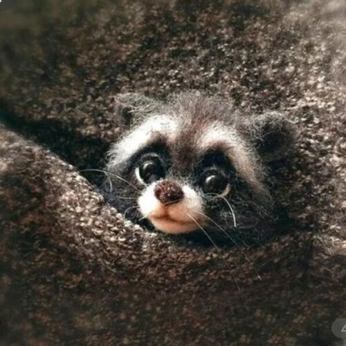 FELTING WOOL BABY RACOON ! FAST SHIP in the USA COMPLETE KIT ,NEW!! ADORABLE DIY