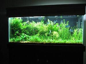 Best Priced LED Planted Aquarium Lighting