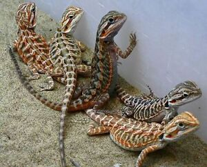 Taking In Unwanted Reptiles