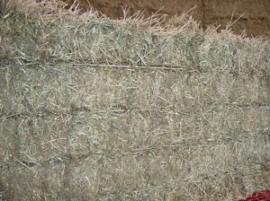 Big Squares Hay and Straw