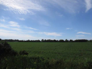Vacant Land in Kingsville, Essex