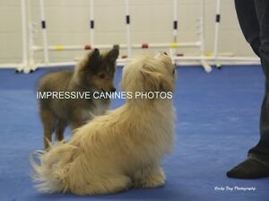 Solid Foundation Puppy Class - Next Session Starts in April! Kitchener / Waterloo Kitchener Area image 2