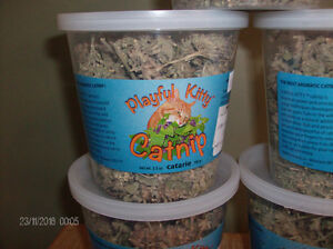 5 containers of Catnip for sale Stratford Kitchener Area image 2