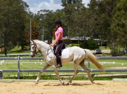 Competitive Second Pony Gelding