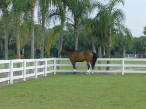 Ocala Room for rent walking distance to HITS Horse show