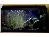 80 Litre Aquarium with nursery tank and all accessories