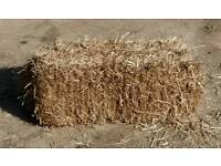 Straw Bales Wheat Straw Chelmsford Pet bedding for Chickens