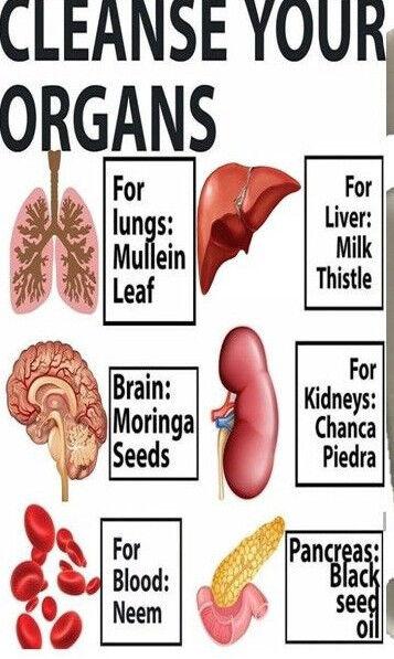 60 CAPS KIDNEY SUPPORT STONE BREAKER CHANCA PIEDRA Herbal liver Support quebra  4