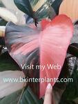 bkinterplants