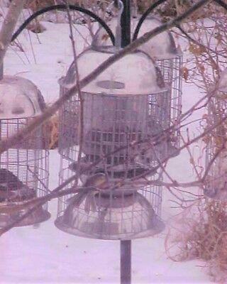ORIGINAL  MIXED SEED LARGE SQUIRREL RACCOON GRACKLE PROOF SS STEEL BIRD FEEDER