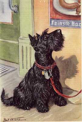 Scottish Terrier - MATTED Dog Art Print - German / NEW U ()