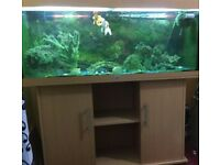 240 litres Jewel Aquarium with fishes, food and accessories