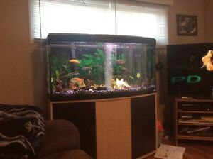 65 gallon bow front