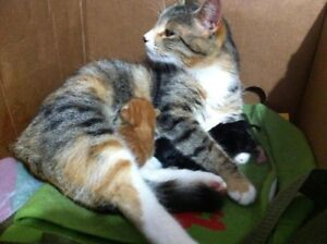 kittens for sell!