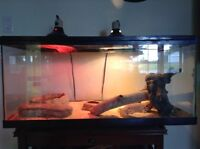 FEMALE Bearded dragon and her cage, good condition