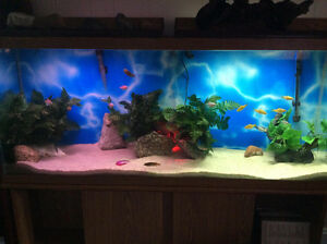 Trade 55 gal fish tank and stand