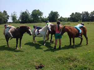 English riding lessons both recreation and show team programs Kingston Kingston Area image 2