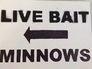 Minnows for sale, Baysville